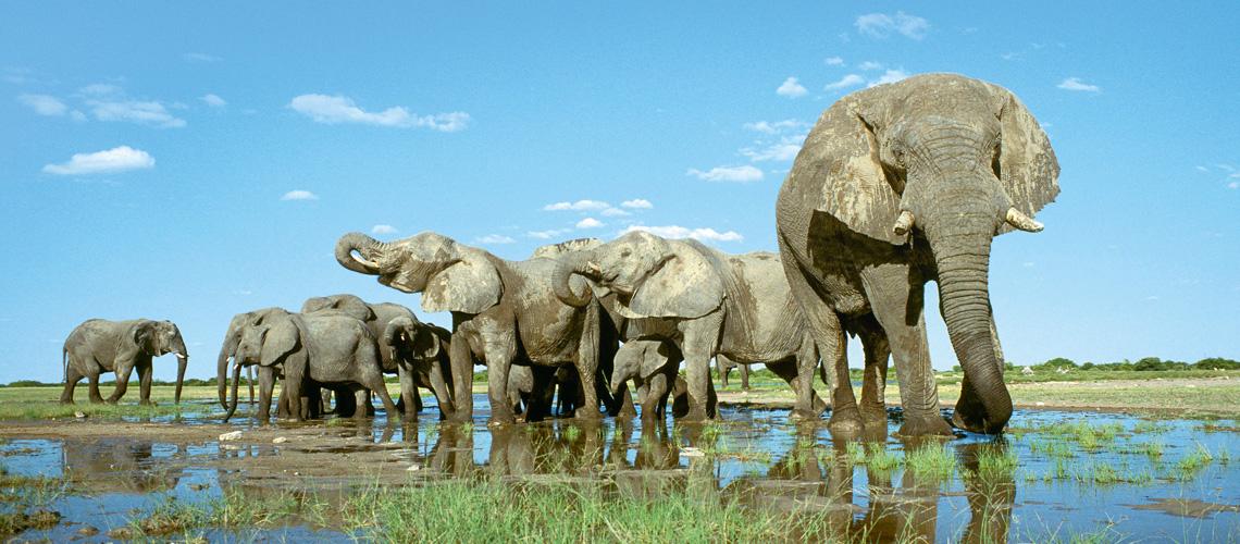 LandYachting Elefanten Namibia