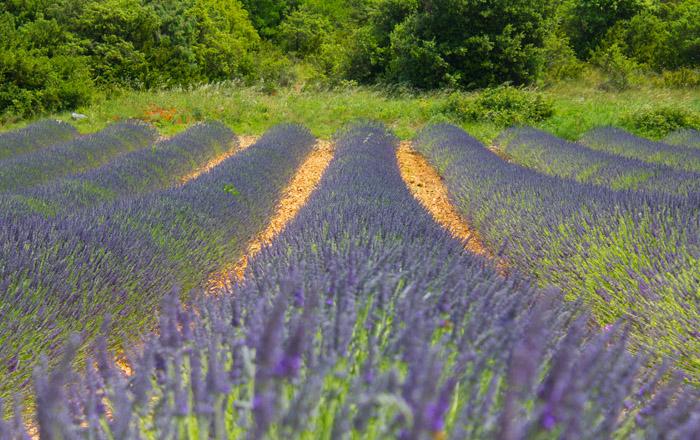 Luxus Camping Frankreich Ardèche