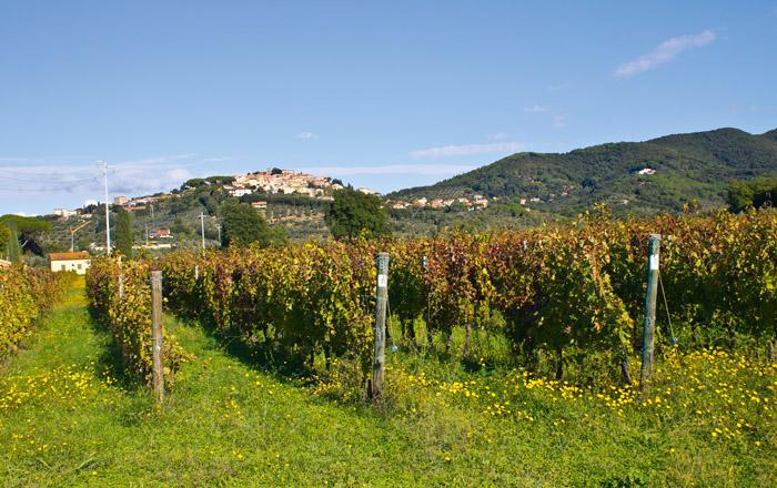 Der Campingplatz liegt im Herzen der Weinstrasse der Etruskischen Küste